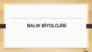 BALIK BYOLOJS 5 Endokrin Bezler Balklarda endokrin bezler