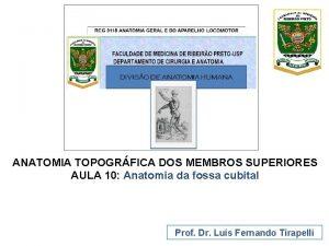 ANATOMIA TOPOGRFICA DOS MEMBROS SUPERIORES AULA 10 Anatomia