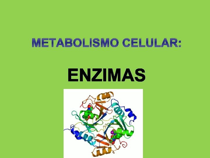 METABOLISMO CELULAR Concepto de metabolismo El metabolismo es