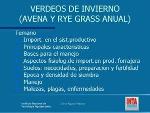 VERDEOS DE INVIERNO AVENA Y RYE GRASS ANUAL