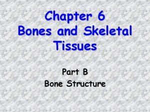 Chapter 6 Bones and Skeletal Tissues Part B