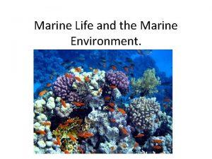Marine Life and the Marine Environment Marine LifeEnvironment