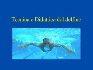 Tecnica e Didattica delfino Storia Il delfino nasce