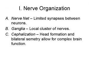 I Nerve Organization A Nerve Net Limited synapses