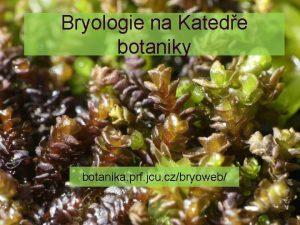 Bryologie na Katede botaniky botanika prf jcu czbryoweb