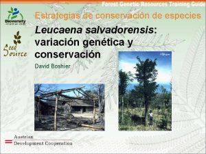 Estrategias de conservacin de especies Leucaena salvadorensis variacin