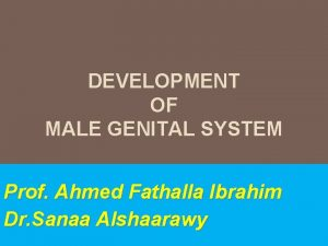 DEVELOPMENT OF MALE GENITAL SYSTEM Prof Ahmed Fathalla