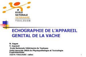 ECOLE NATIONALE VETERINAIRE TOULOUSE ECHOGRAPHIE DE LAPPAREIL GENITAL