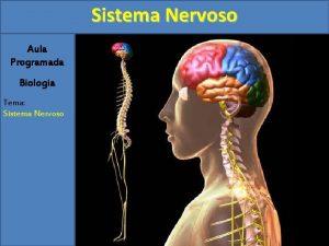 Sistema Nervoso Aula Programada Biologia Tema Sistema Nervoso