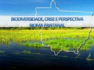 Bioma AMAZNIA 53 Bioma CERRADO 40 Bioma PANTANAL