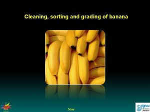 Cleaning sorting and grading of banana Next Cleaning