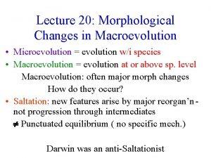 Lecture 20 Morphological Changes in Macroevolution Microevolution evolution