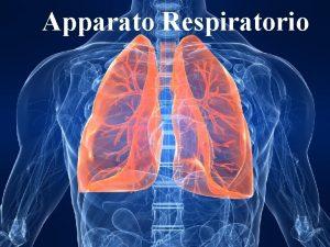 Apparato Respiratorio 1 Lo scambio dei gas avviene