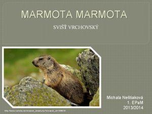 MARMOTA SVI VRCHOVSK http www nahuby skobrazokdetail php