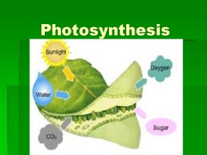 Photosynthesis Energy Transformations ATP is the energy molecule