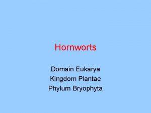 Hornworts Domain Eukarya Kingdom Plantae Phylum Bryophyta Anthoceros