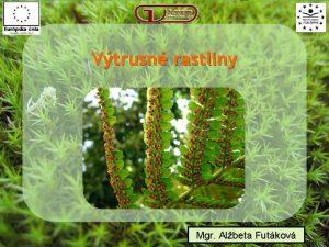 Vtrusn rastliny Mgr Albeta Futkov Vtrusn rastliny Oddelenia