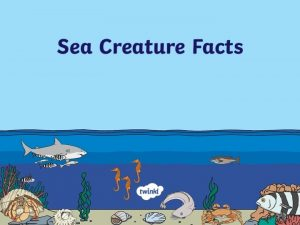 Octopus Habitat Oceans and coral reefs Diet Small