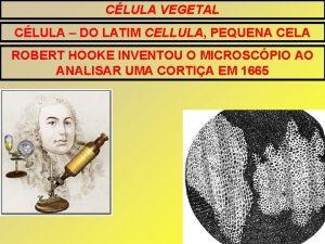 CLULA VEGETAL CLULA DO LATIM CELLULA PEQUENA CELA