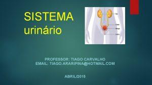 SISTEMA urinrio PROFESSOR TIAGO CARVALHO EMAIL TIAGO ARARIPINAHOTMAIL
