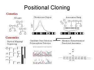 Positional Cloning Genetics Chromosome Region Association Study LOD