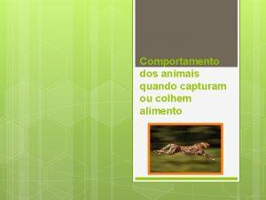 Comportamento dos animais quando capturam ou colhem alimento