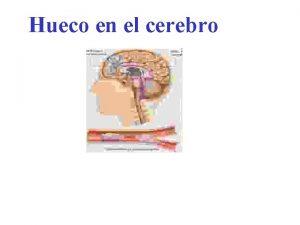 Hueco en el cerebro Fue descubierto que nuestro
