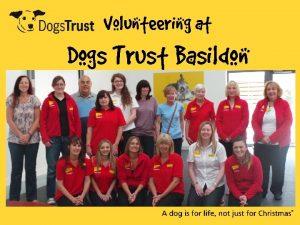 Volunteering at Dogs Trust Basildon Volunteering History of