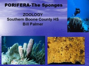 PORIFERAThe Sponges ZOOLOGY Southern Boone County HS Bill