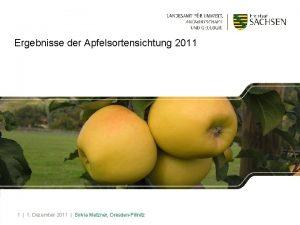 Ergebnisse der Apfelsortensichtung 2011 1 1 Dezember 2011