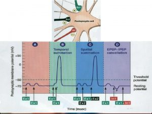 The Effects of Drugs on Neurotransmitters q Agonist