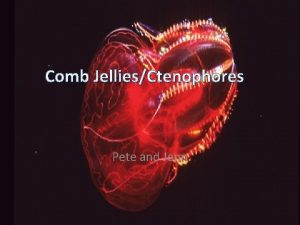 Comb JelliesCtenophores Pete and Jenn Table of Contents
