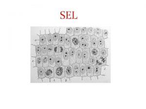 SEL Nobel kedokteran 2013 untuk transportasi sel http