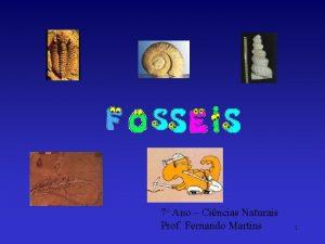 7 Ano Cincias Naturais Prof Fernando Martins 1