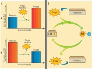 Metabolismo Energtico Celular Reaes qumicas entre molculas reagentes