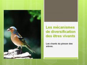 Les mcanismes de diversification des tres vivants Les