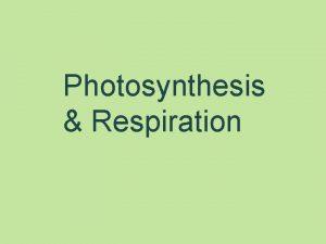Photosynthesis Respiration Understanding Photosynthesis Respiration Where does photosynthesis