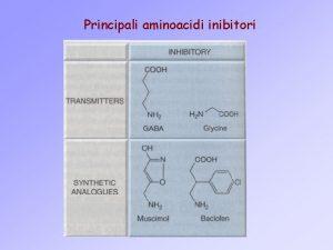 Principali aminoacidi inibitori PRINCIPALI CLASSI DI RECETTORI GABAERGICI