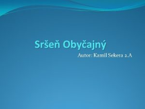 Sre Obyajn Autor Kamil Sekera 2 A Opis