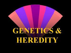 GENETICS HEREDITY w GENETICS The study of the