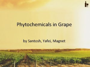 Phytochemicals in Grape by Santosh Yafei Magnet Introduction