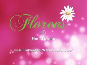 Flori si plante Liceul Tehnologic Mircea Vulcanescu Obiectul