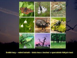Svtl lesy velmi bohat biota lesa x bezles