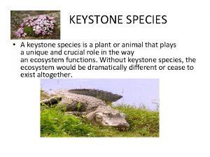 KEYSTONE SPECIES A keystone species is a plant