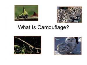 What Is Camouflage How do animals protect themselves