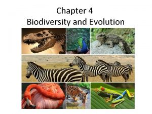 Chapter 4 Biodiversity and Evolution What is Biodiversity