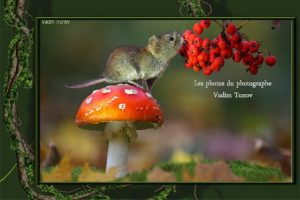 Les photos du photographe Vadim Tunov Vadim Trunov