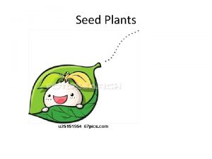 Seed Plants Seed plants are divided into two