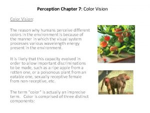 Perception Chapter 7 Color Vision The reason why