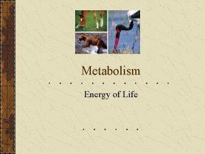 Metabolism Energy of Life Metabolic Pathways Anabolic Pathways